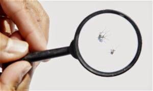 Cidade do interior de SP tem 10 mil novos casos de dengue em uma semana