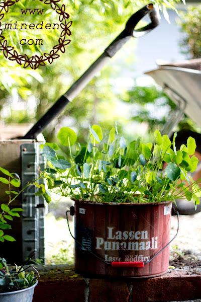 Växthusbygge