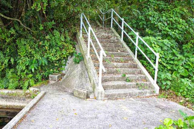 spring, stairway, heavy brush,handrails