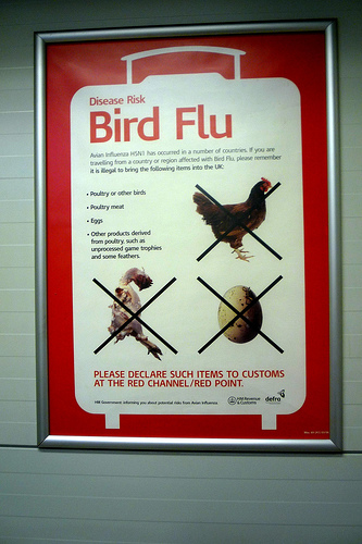 """essay about bird flu If high-pathogenic bird flu became something that 17 thoughts on """" the avian flu epidemic i just presented my essay about the negative."""