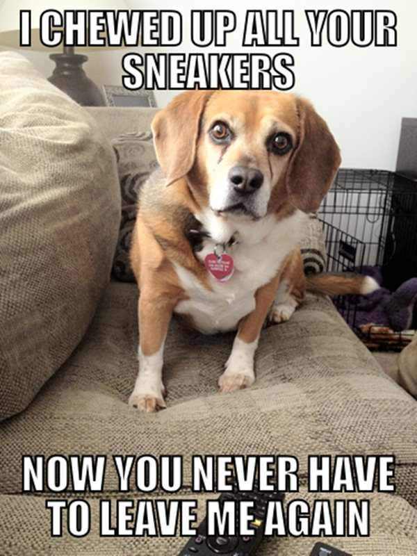 animal pictures with captions, i chewed up all your sneakers