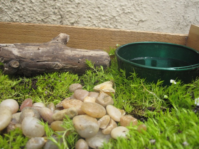 Natural elements in the fairy garden