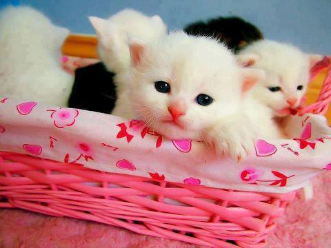 Cute innocent looks of cats in basket image