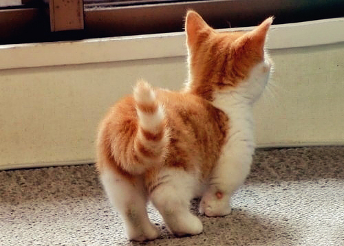 fizzcats: cute, fluffy, cat, kitten, baby