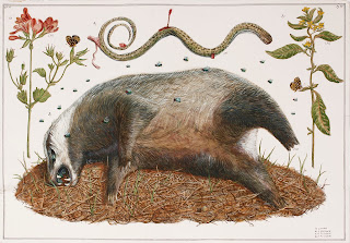 Roadkill, egg tempera, illustration, illumination, road kill, dead animal