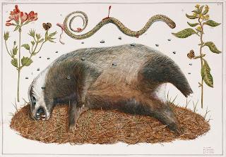 Roadkill, egg tempera, illustration, illumination, road kill, dead animal