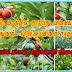 ஒரே மரத்தில் 40 வகையான பழங்கள்-காணொளி,புகைப்படங்கள்