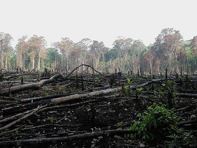 http://pengertian-definisi.blogspot.com/2011/10/deforestasi.html