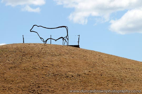 Steer sculpture in Havelock North photograph