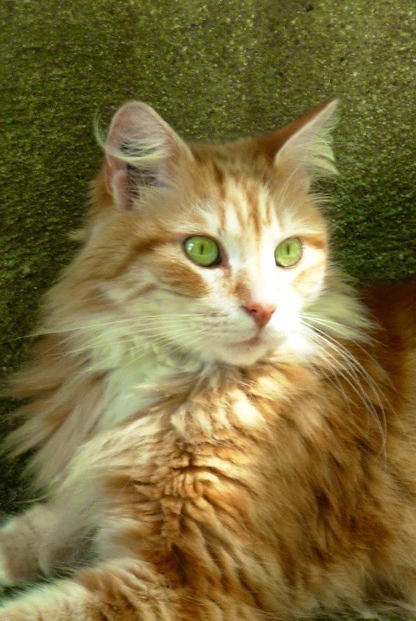chat de rencontres s gravenbrakel