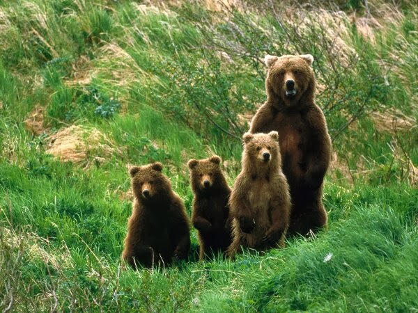Funny animals of the week - 28 February 2014 (40 pics), bear family