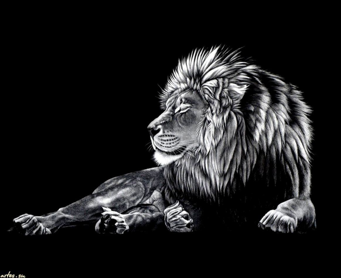 angry lion wallpaper black and white amazing wallpapers