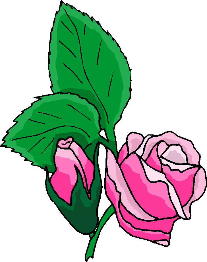 Pink Rose Free Clipart