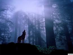 Cinci Wolf Pack