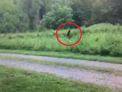 Hendersonville North Carolina Bigfoot