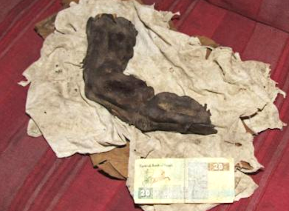 ufo sightings daily alien mummified finger 13 8 inches found in egypt 6 photos march 2012. Black Bedroom Furniture Sets. Home Design Ideas