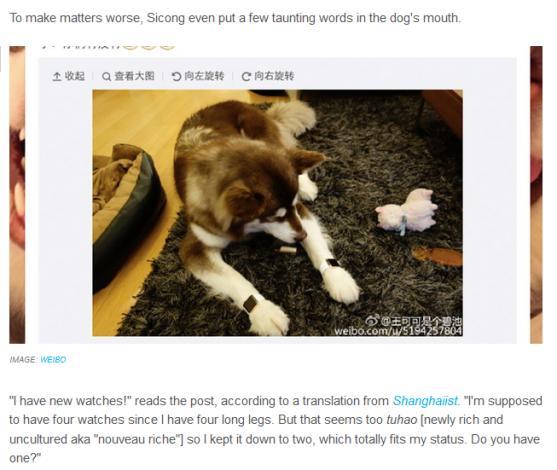 Welcome to Linda Ikeji's Blog: This dog has 2 gold Apple ...