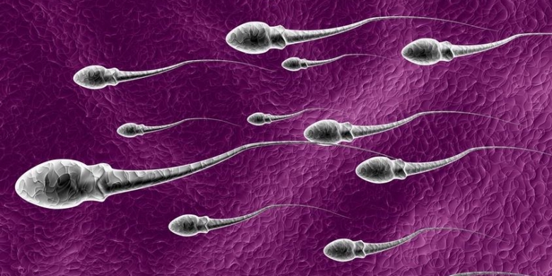 Faktor Yang Dapat membunuh Sel Sperma