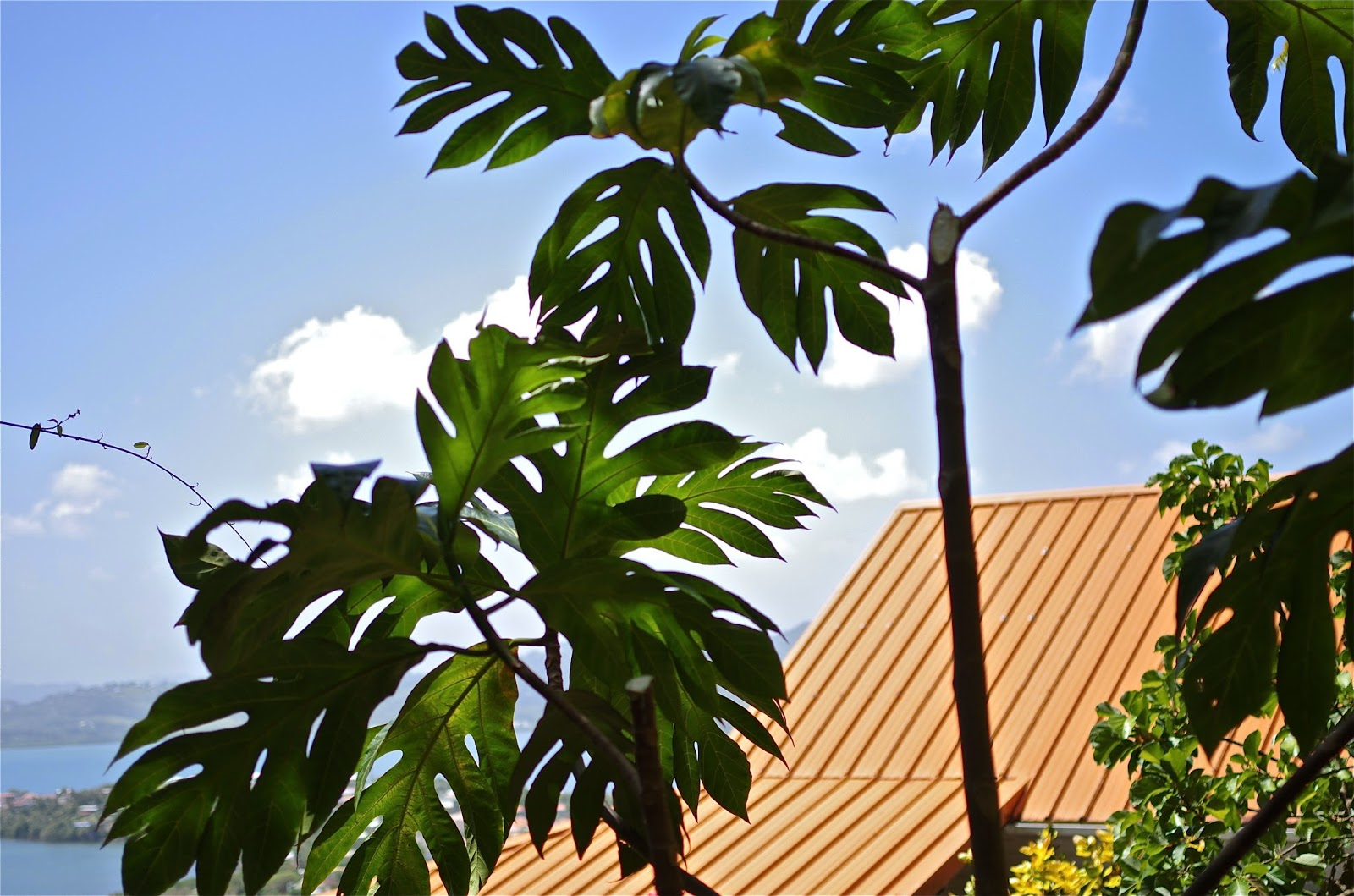 Persil et oignon pays ortanique - Quand repiquer le persil ...