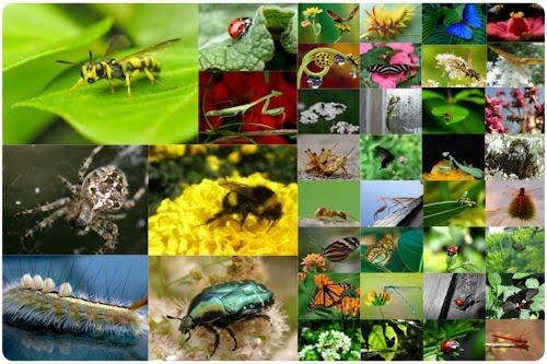 Tratamientos naturales remedios ecologicos para alejar a - Como ahuyentar los mosquitos ...