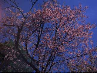 ฤดูร้อนเกาหลี