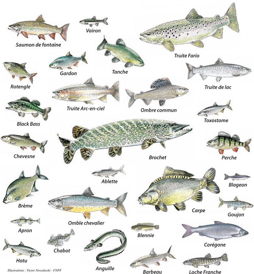 Lo c eoi cartagena la nourriture fruits l gumes viande for Nourriture du poisson