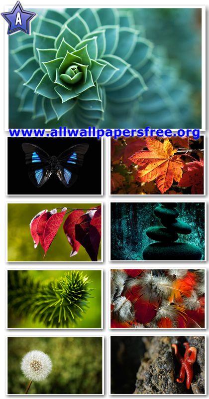 40 Amazing Nature Wallpapers 1920 X 1200 [Set 13]