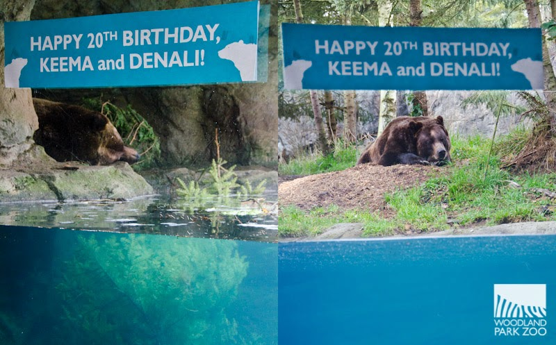 Woodland Park Zoo Blog Grizzly brothers turn 20