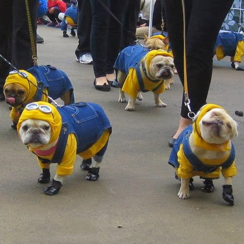 6 Adorable and funny dressed up pets