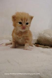 anak kucing umur 3 minggu