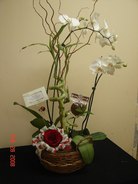 Bamboo Orchid Plant4