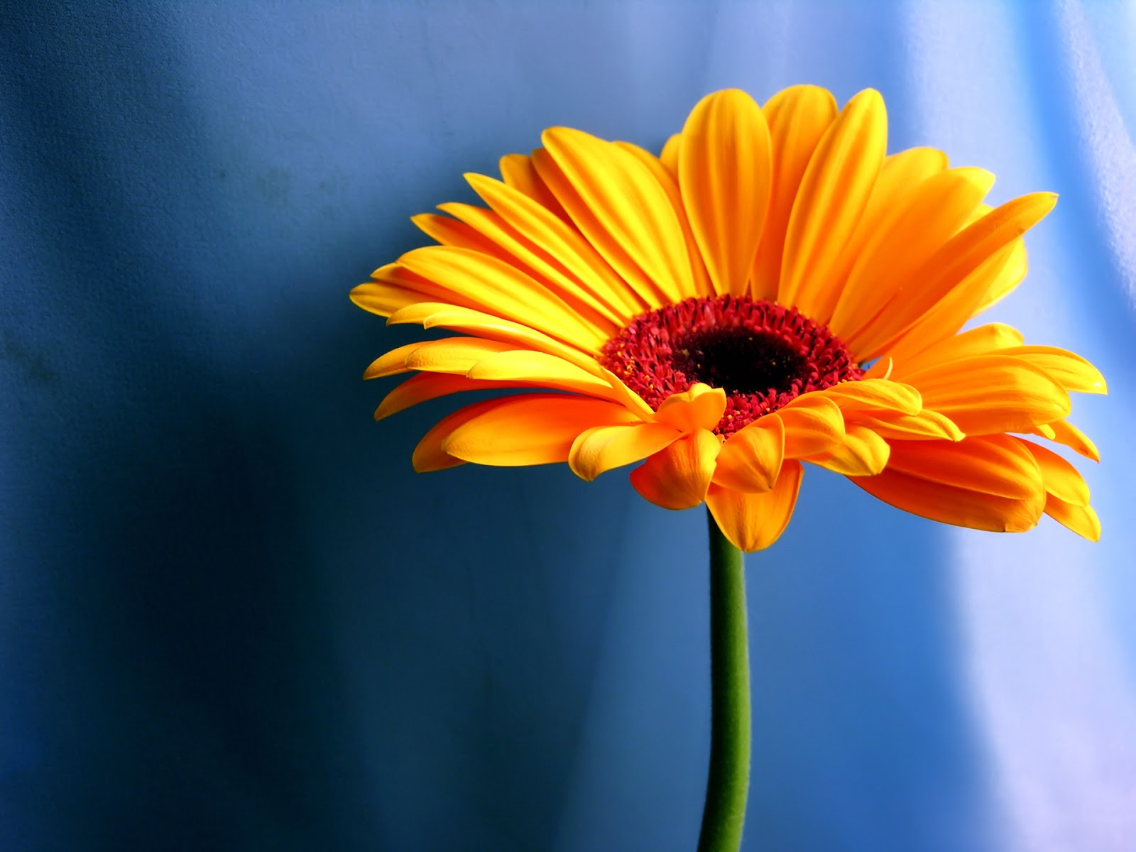 Beautiful Flower New Wallpapers 2013 Blogging Tips