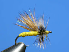 Yellow Sally Stonefly