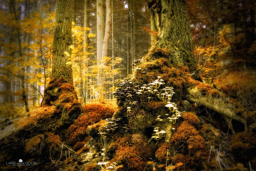 art photography the beauty of nature by lars van de goor gonooon. Black Bedroom Furniture Sets. Home Design Ideas