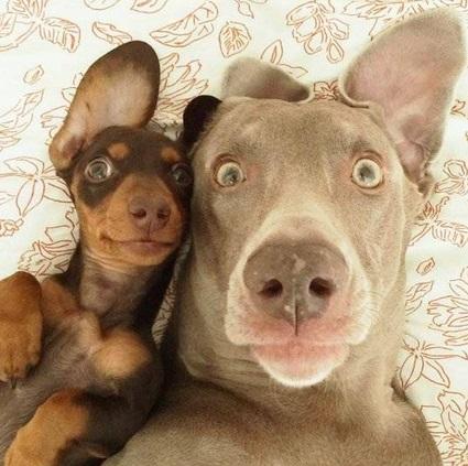 Selfies graciosas