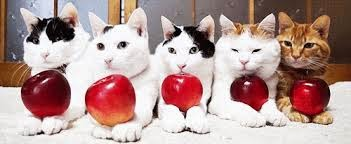 kitten versus apples