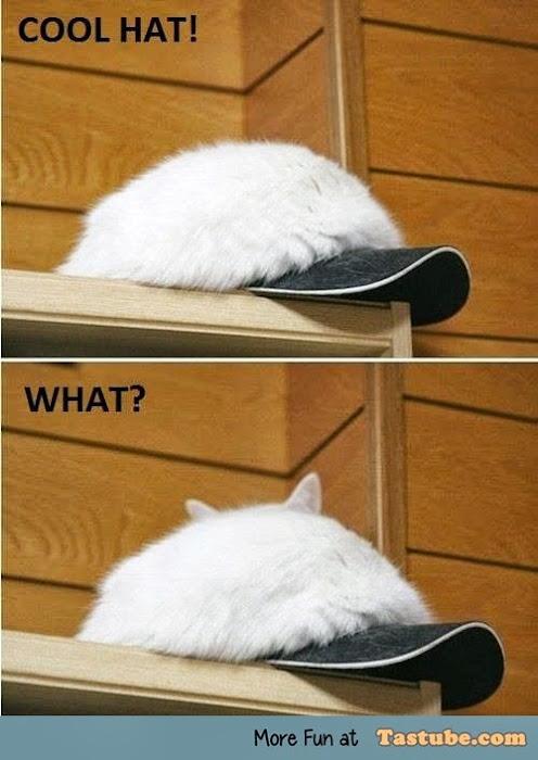 Damn you cats
