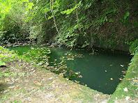 Bassa de la Font del Termenal