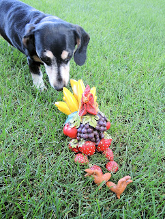 Frooster the fruit rooster meeting Doggie.