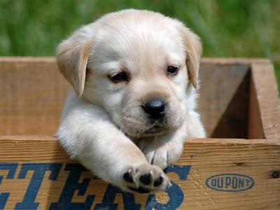 Cún con dễ thương, cún con cute