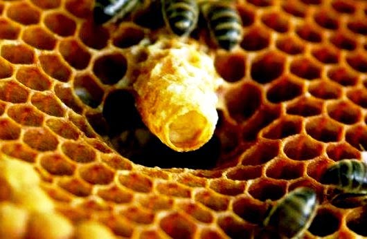 royal jelly side effects