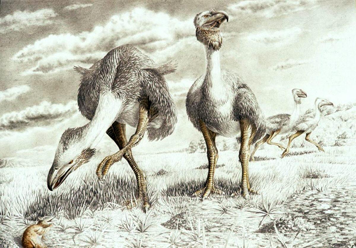 Resultado de imagen de Variaciones fortuitas hicieron vivir a muchos animales y plantas