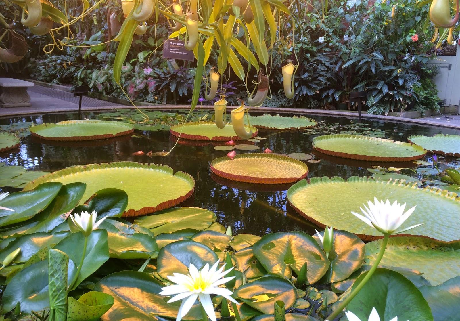 仙女與黃玫瑰 紐西蘭奧克蘭 11 中央公園 auckland domain 冬季