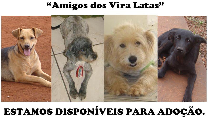 Amigos dos Vira Latas