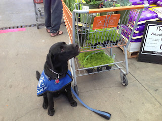 Coach is sitting on the left of the shopping cart and is looking up at the succulents in the cart.