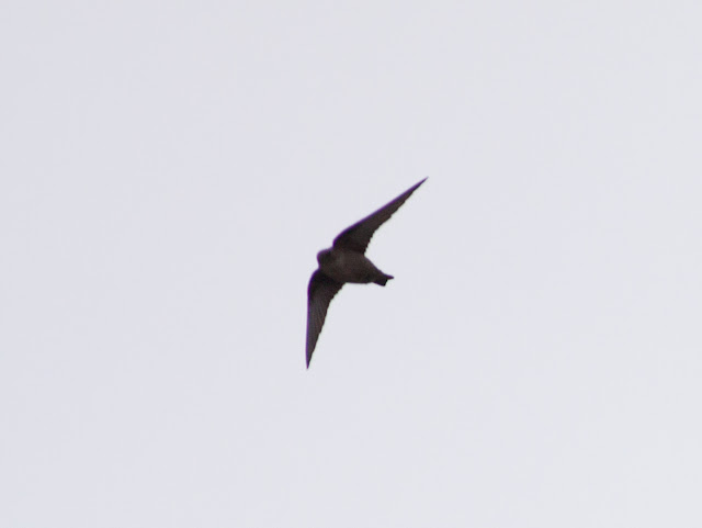Crag Martin, Chesterfield