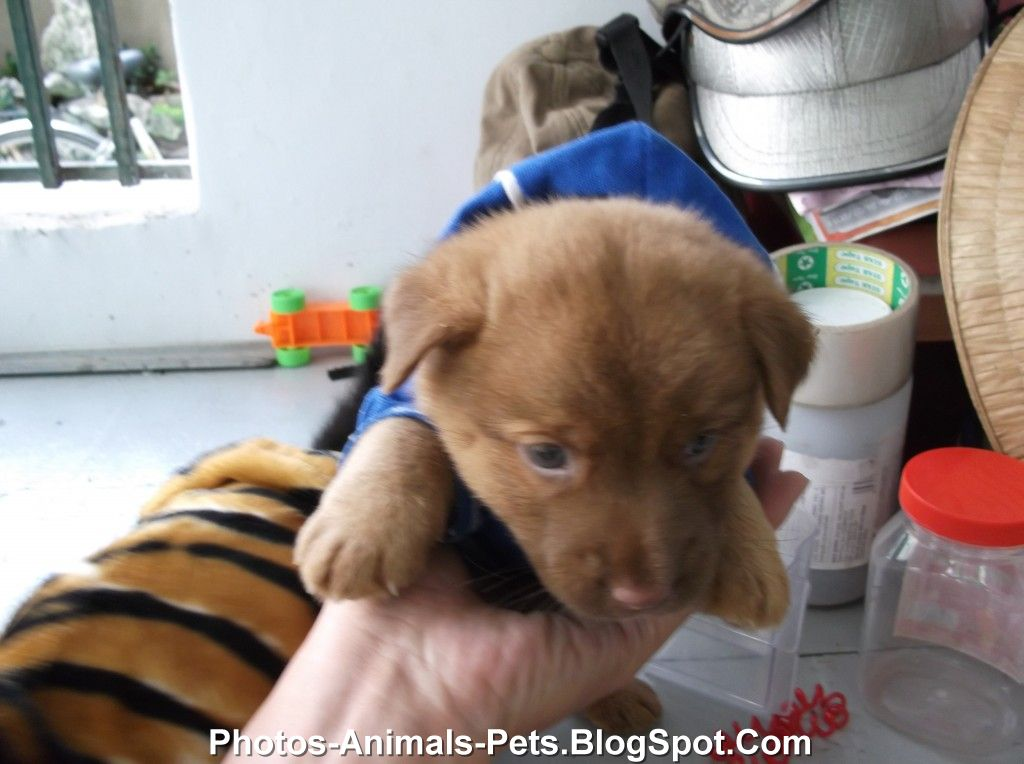 Pictures puppy