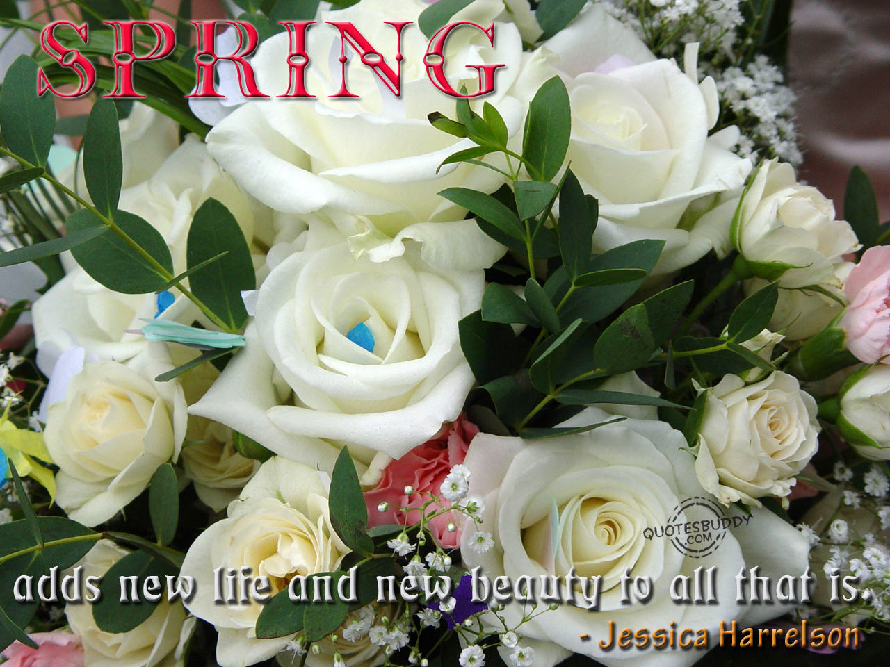 Magazines Time Spring Quoteswords Of Wisdom Quotes Spring Flowers