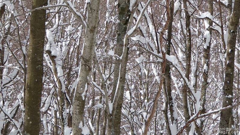 Panasonic TZ70, foto di esempio. Rami con la neve