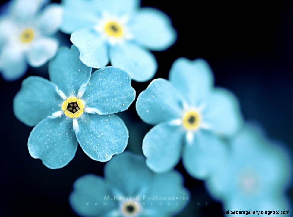 60 Beautiful Flowers Wallpapers Wallpaper Wednesday   Hongkiat